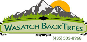 wastch-back-trees-Logo-phone